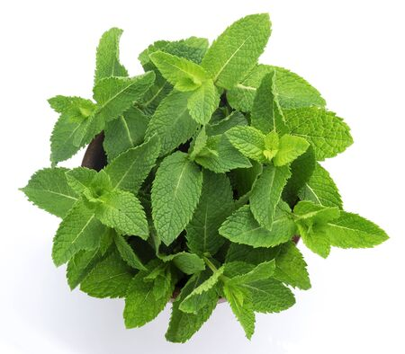 Fresh mint leaves bunch on white background, isolated peppermint in wooden bowl, common herb mint bundle, top view
