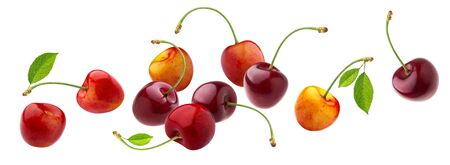 Cherry isolated on white background with clipping path, fresh falling cherries with stems and leaves, berry collection