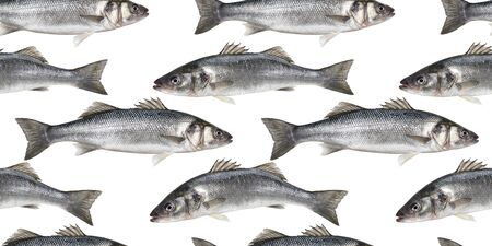 Raw fish seamless pattern, collection of fresh sea bass fish isolated on white background with clipping path
