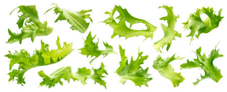 Mix of frisee lettuce leaves isolated on white background, fresh salad ingredients collection Archivio Fotografico