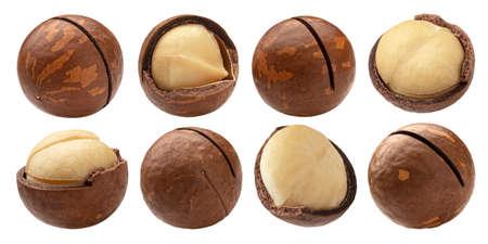 Macadamia nuts isolated on white background 免版税图像
