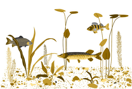 freshwater aquarium plants: River or lake underwater world. Water plants, fish. Monochrome flat vector background.