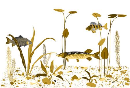 Rzeki lub jeziora podwodny świat. Rośliny wodne, ryby. Monochromatyczny płaski wektora tła.