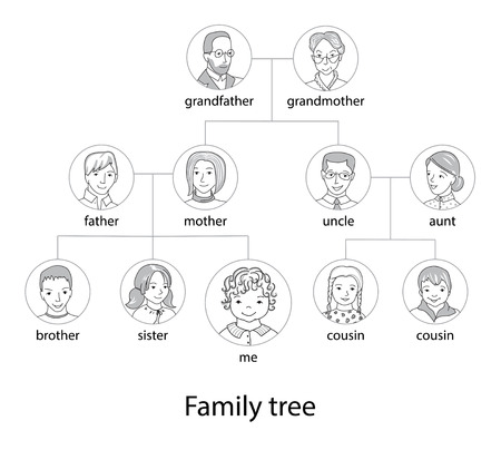 young tree: Family tree chart thin line style vector Illustration
