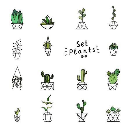 Doodle green plants. Hand-drawn leaves, succulents and cactus with poly faceted flower pot. Outline home plants isolated on a white background. Cute illustration polygonal element for the interior