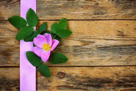 rosehip flower on old wooden table with pink silk ribbon border, vintage style Stock fotó