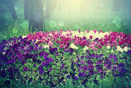 forest landscape with flowers, pansies flowerbed, magic background 免版税图像