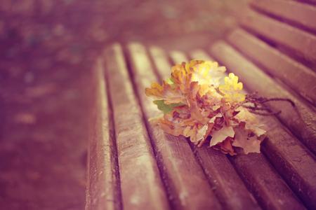 oak branches lie on old wooden bench in park, autumn landscape, retro style Banco de Imagens