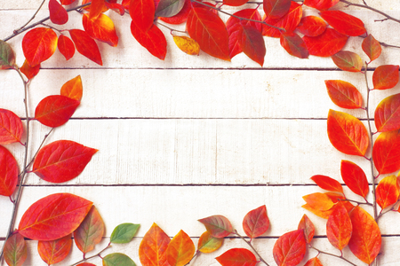 Autumn background with branches, colorful leawes on white wooden table, top view, flat lay, free space for text