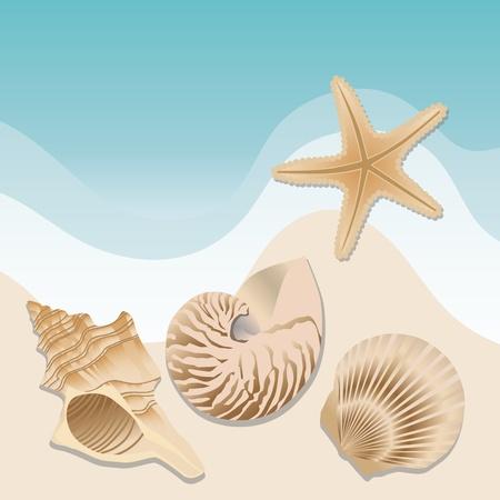 palourde: mer, coquille vecteur