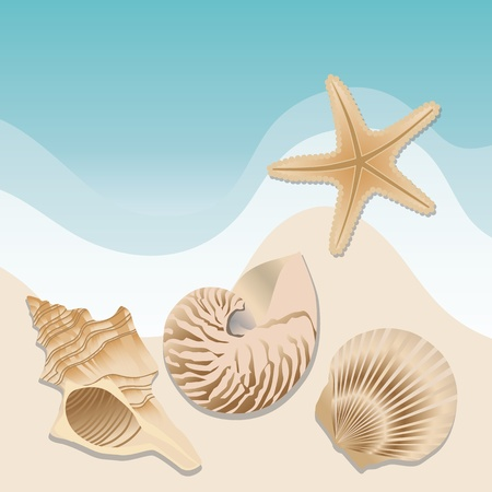 oyster shell: sea shell vector
