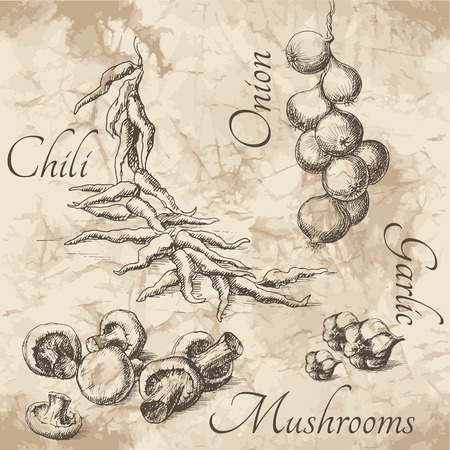 old paper background: Sketches for menu of food. Chili, onion, mushrooms and garlic on the old paper background.