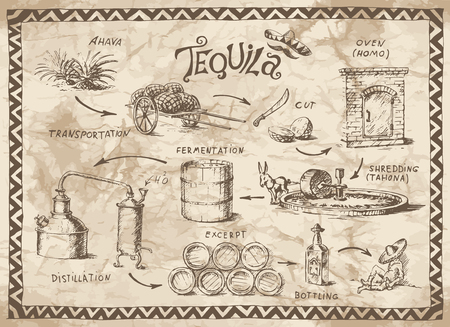 Production scheme of tequila on the old paper background Illustration