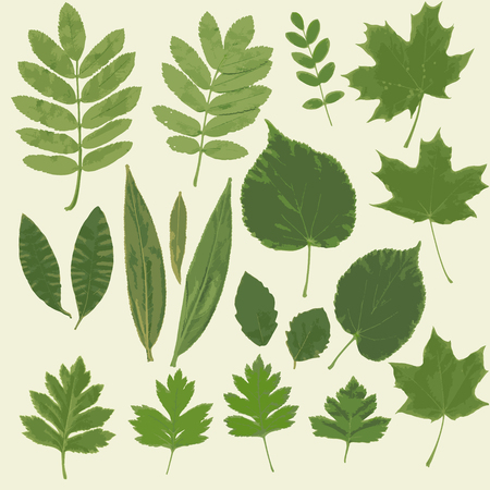 mountain ash: Collection of different leaves. Herbarium. Dried leaves of mountain ash, maple, oak, roses and other. Vector illustration.