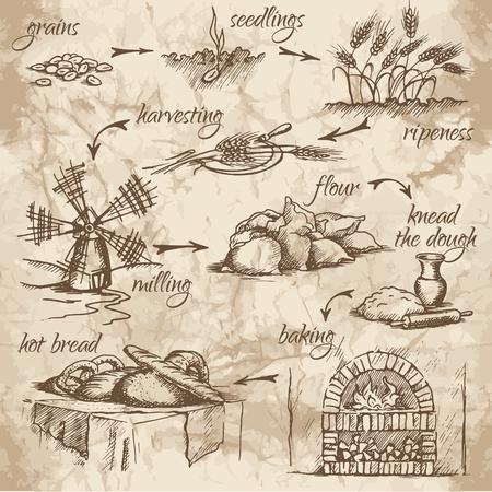 Dibujo a mano alzada de las etapas de producción de pan en el viejo fondo de la acuarela. A partir de granos de pan. Pan fresco, sabroso y caliente.