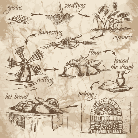 Freehand drawing of bread production stages on the old watercolor background. From grains to bread. Fresh, tasty and hot bread.