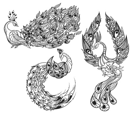 mythical phoenix bird: Hand-drawn illustration of birds. Drawing of three mythical swans. Vector illustration.