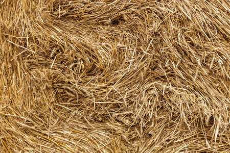 The elements and components of agricultural Background of haystack close up