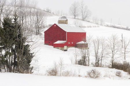 covered fields: On a cold winter day, a red barn stands in stark contrast to snow covered fields as more snow continues to fall.
