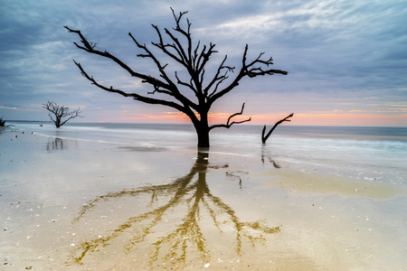 silhoutted: Live Oak trees are silhoutted and reflected on the beach at Botany Bay on Edisto Island near Charleston, South Carolina.