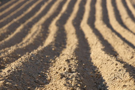 Parallel furrows of a pyramidal shape on a plowed spring field. The appearance of the soil with sown potatoes. Leaving away perspective with a gradual blur. Agriculture and growing solanaceous 스톡 콘텐츠