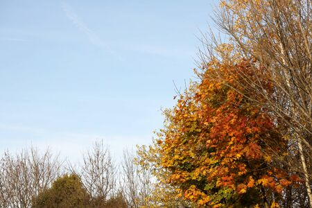 Yellowed foliage on autumn trees on a sunny clear day. Change of seasons. Calm time to summarize efforts and harvest. Solemn mood. Wilting nature. An abundance of warm colors. Fiery colors. Фото со стока