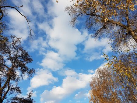 Bright yellow foliage against a clear blue sky with clouds. The fiery colors of a fading nature in the bright rays of the sun. Change of seasons and harvest. Solemn mood. Autumn trees in the park.