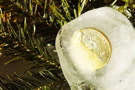 Bitcoin gold coin frozen in half in a piece of ice on a white background with branches of a Christmas tree. New Years surprise and a gift for the holiday. Asset freeze.Electronic money and enrichment.