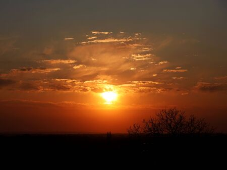 Dark silhouette of trees and cousins against the background of an orange sunset. Evening nature folds to a romantic mood. Warm colors. The region of the temperate climate of the European continent