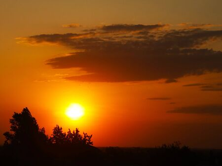 Dark silhouette of trees and cousins against the background of an orange sunset. Evening nature folds to a romantic mood. Warm colors. The region of the temperate climate of the European continent. Stock Photo
