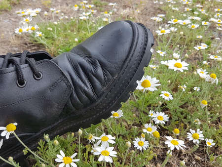A soldier's boot stomps camomile flowers. Destruction of the environment. Abuse of nature. A symbol of nature destroyed by civilization. The madness of war. Medicinal plants blooming in the meadow.
