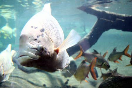 fishy: Fishy
