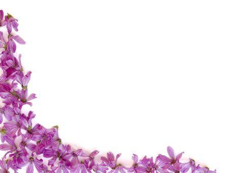 sfondo di fiori viola