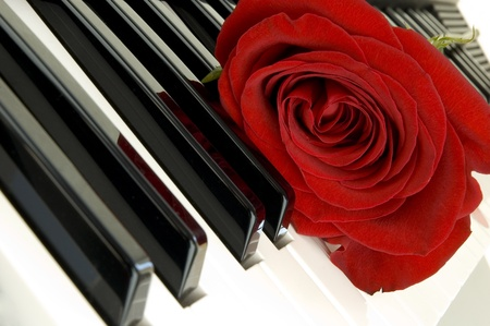 red rose on piano  photo