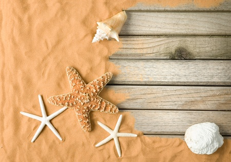 conch: wood and sand background Stock Photo