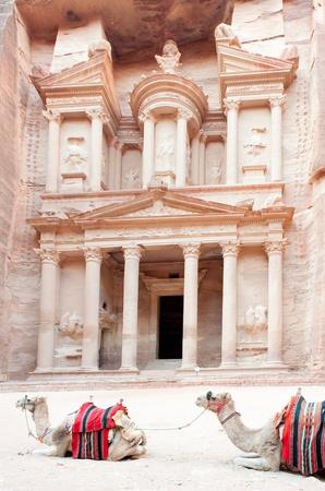 dromedaries: dromedaries resting in front of the Treasury of Petra in Jordan