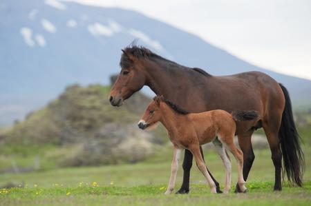 yegua: yegua y potro en un prado