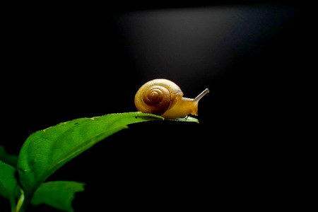 chitin: Snails lay on the leaf