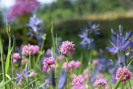 wild flowers: Spring wild flowers