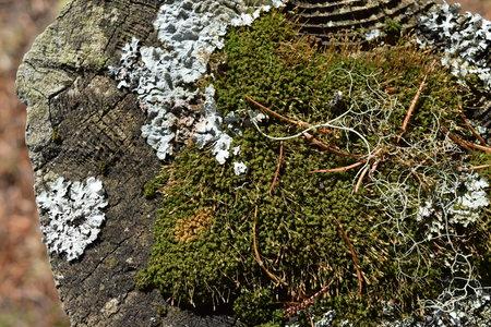 tree stump: Moss on tree stump