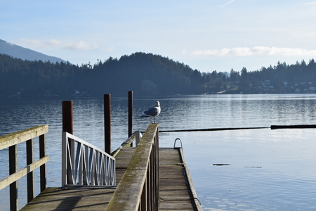 fishing pier: Seagull on Fishing pier