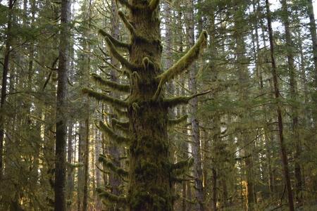 lichen: Lichen tree Stock Photo