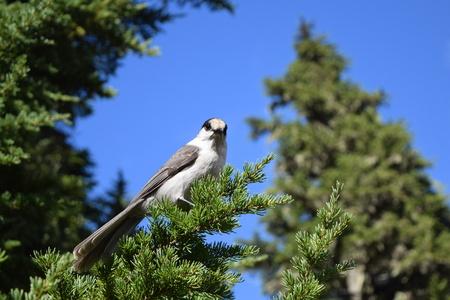 Strathcona Park - Vancouver Island의 위스키 잭