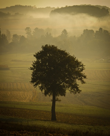Single tree silhouette in morning fog, vintage look Stock Photo - 10804642