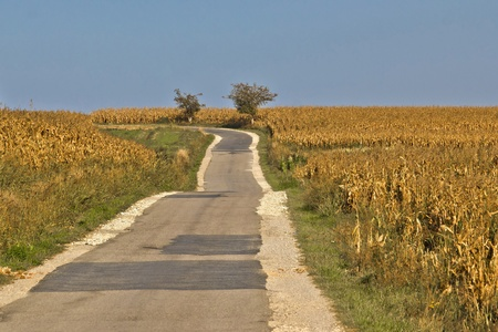 cornfield: Beautiful countryside road through golden cornfields under blue sky Stock Photo