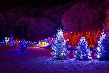 illumination: Christmas Fantasy - pinos en x-mas luces, ?azma, Croacia Foto de archivo