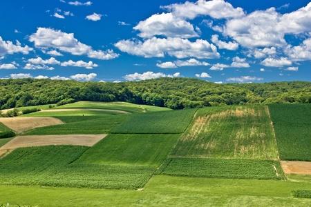 Beautiful green scenery landscape fields in spring time under clue cloudy sky, Croatia Stock Photo - 11475002