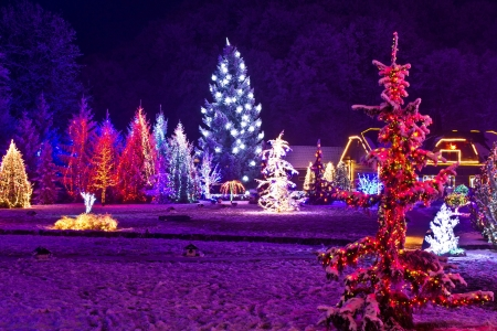 Christmas fantasy - park & forest in xmas lights, Croatia