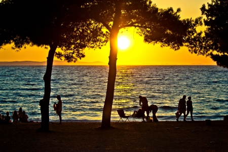 People silhouette on beach at sunset under pine tree