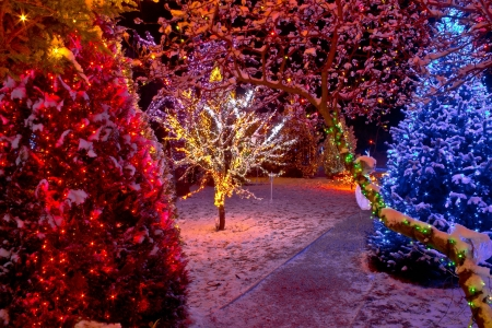 Colorful Christmas lights on trees, glowing nature